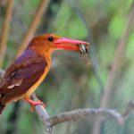 birding trips with best bhutan tour operator