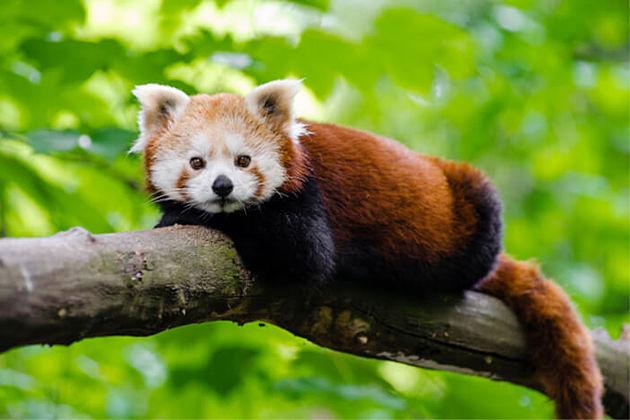 Sakteng Wildlife Sanctuary - UNESSCO World Heritage