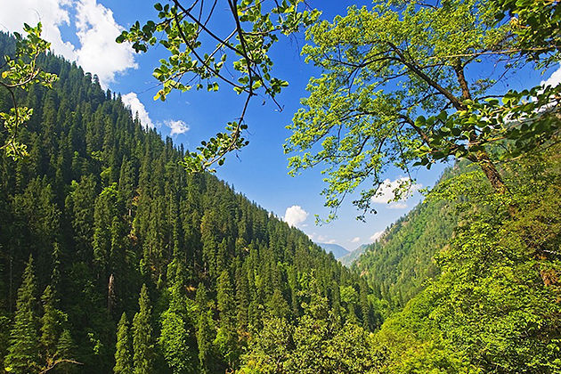 Torsa Strict Nature Reserve attractive destinations punakha