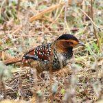 bird - bhutan birding tours