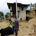 Mithun breeding farm