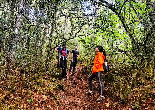 Phajoding trek - druk path trek 9 days