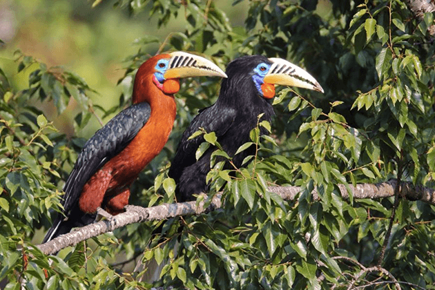 Sultan Tit - bhutan birding tour