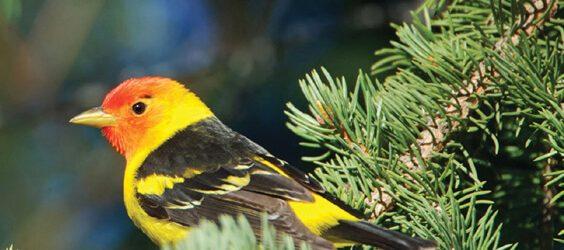 bhutan far east birding - best bhutan birding tours