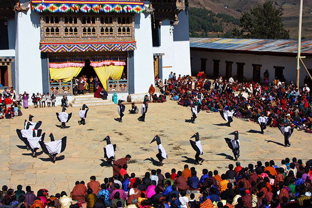 black necked crane festival in bhutan
