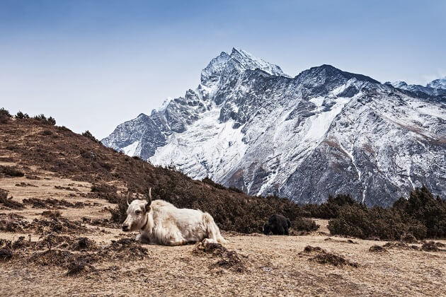 Panka - best dagala trek bhutan