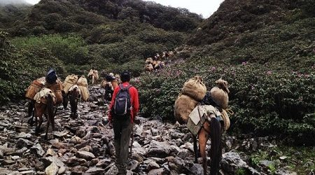 Bhutan trekking in Laya Gasa